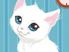 飼養小貓,Kitty Care