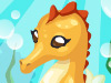 飼養海馬,Seahorse Care